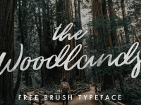 The Woodlands Brush Typeface
